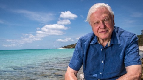 Attenborough e la grande barriera corallina