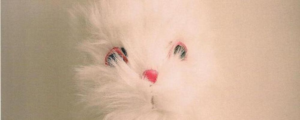 la-morte-di-bunny-munro_h_partb