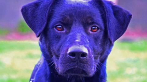 Scott è un cane blu, un racconto di Giulia Mastrantoni