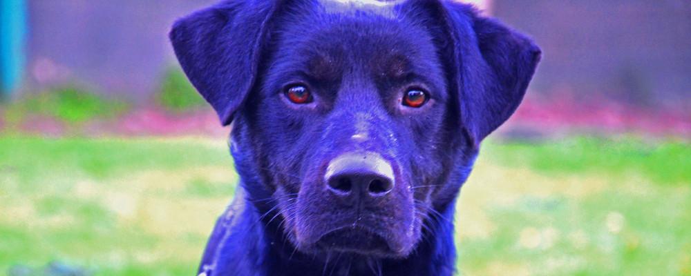 scott è un cane blu